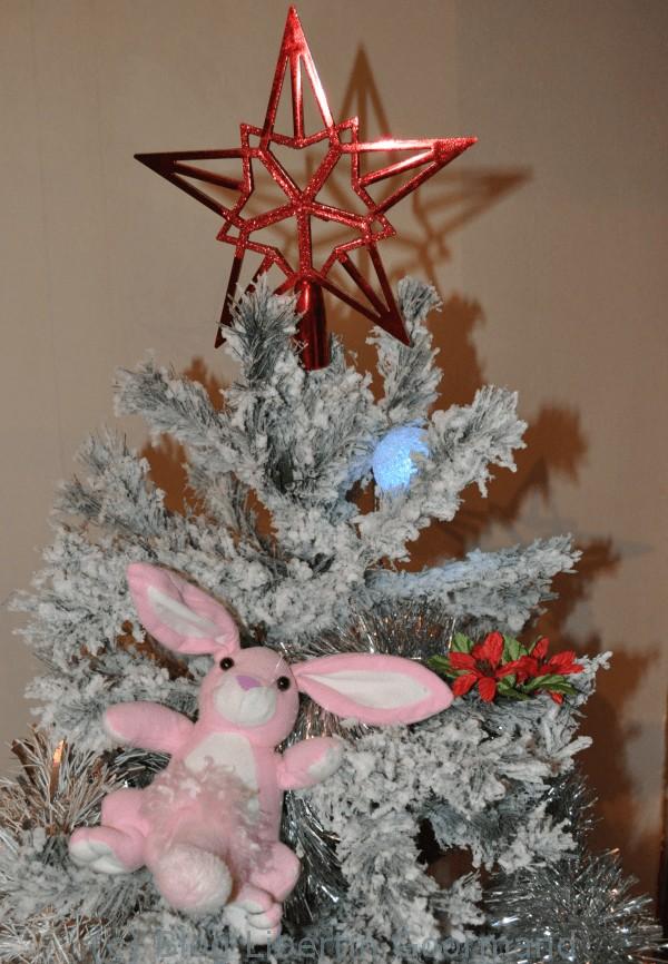 Pinky de Noel 2013